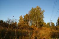 http://images.vfl.ru/ii/1572536917/11d2015b/28396766_s.jpg