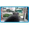 1,защитная сетка для кошек,антикошка киев