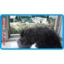 3,защитная сетка для кошек,антикошка киев