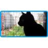 9,защитная сетка для кошек,антикошка киев