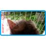 11,защитная сетка для кошек,антикошка киев