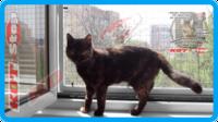 20,защитная сетка для кошек,антикошка киев