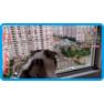 24,защитная сетка для кошек,антикошка киев