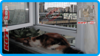 29,защитная сетка для кошек,антикошка киев