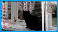 30,защитная сетка для кошек,антикошка киев