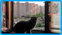 31,защитная сетка для кошек,антикошка