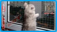 33,защитная сетка для кошек,антикошка
