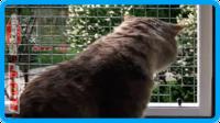 35,защитная сетка для кошек,антикошка