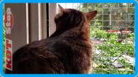 37,защитная сетка для кошек,антикошка