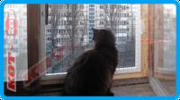 38,защитная сетка для кошек,антикошка