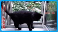 40,защитная сетка для кошек,антикошка