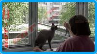 45,защитная сетка для кошек,антикошка