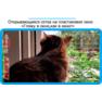 18,защитная сетка решетка для кошек киев,кошки,антикошка киев,сетка на окно,кот стоп,кот stop