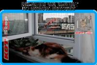 15,защитная сетка решетка для кошек киев,кошки,антикошка киев,сетка на окно,кот стоп,кот stop