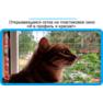 21,защитная сетка решетка для кошек киев,кошки,антикошка киев,сетка на окно,кот стоп,кот stop
