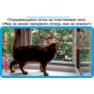 24,защитная сетка решетка для кошек киев,кошки,антикошка киев,сетка на окно,кот стоп,кот stop