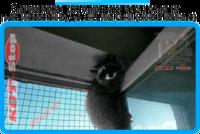 34,защитная сетка решетка для кошек киев,кошки,антикошка киев,сетка на окно,кот стоп,кот stop