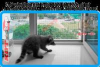 36,защитная сетка решетка для кошек киев,кошки,антикошка киев,сетка на окно,кот стоп,кот stop