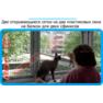 38,защитная сетка решетка для кошек киев,кошки,антикошка киев,сетка на окно,кот стоп,кот stop