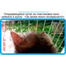 42,защитная сетка решетка для кошек киев,кошки,антикошка киев,сетка на окно,кот стоп,кот stop
