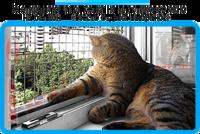 44,защитная сетка решетка для кошек киев,кошки,антикошка киев,сетка на окно,кот стоп,кот stop
