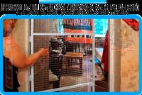 30,защитная сетка решетка для кошек киев,кошки,антикошка киев,сетка на окно,кот стоп,кот stop