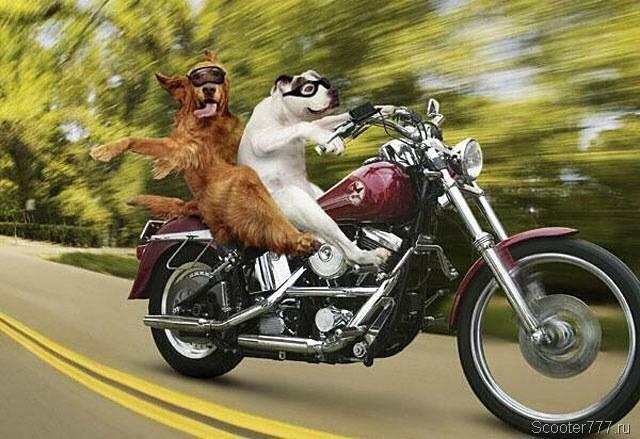 Улыбка (юмор, добрые анекдоты, смешные картинки) - Page 5 28694464