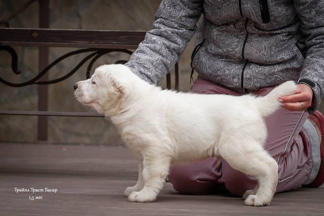 http://images.vfl.ru/ii/1574962042/be58998b/28734182_m.jpg