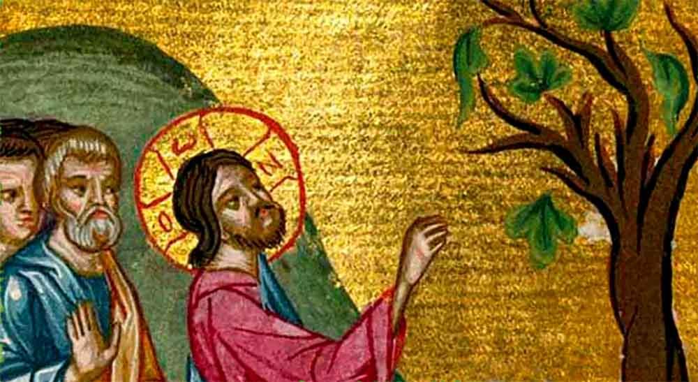ლეღვის ხის შეერისხვა