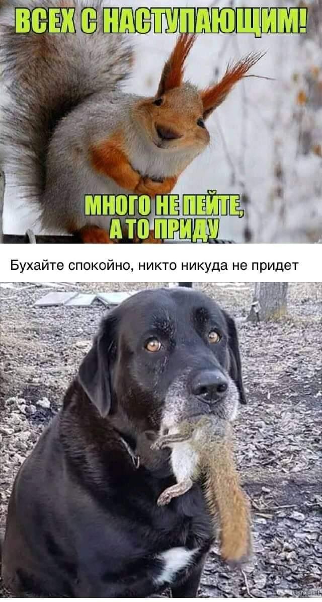 http://images.vfl.ru/ii/1577195646/83d09578/29012020.jpg