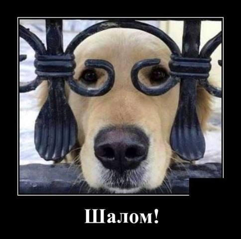 http://images.vfl.ru/ii/1578165517/02ea385a/29105992_m.jpg