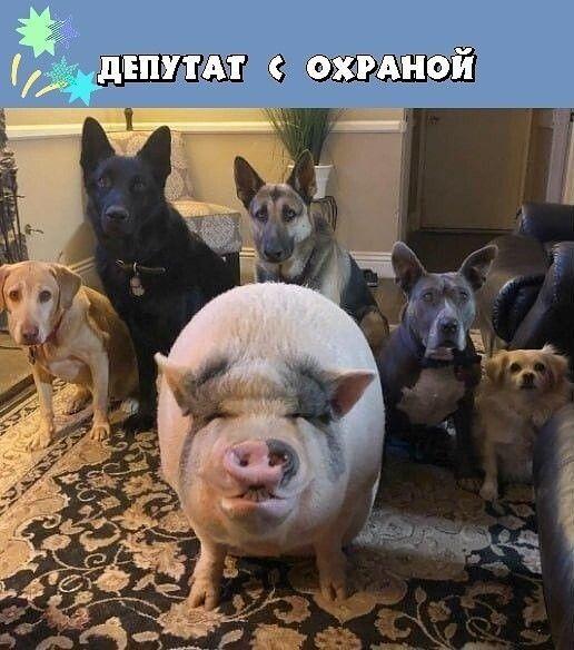 http://images.vfl.ru/ii/1578658417/23303574/29159882.jpg