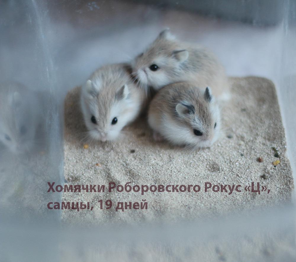 http://images.vfl.ru/ii/1581774539/022c5be1/29584617.jpg