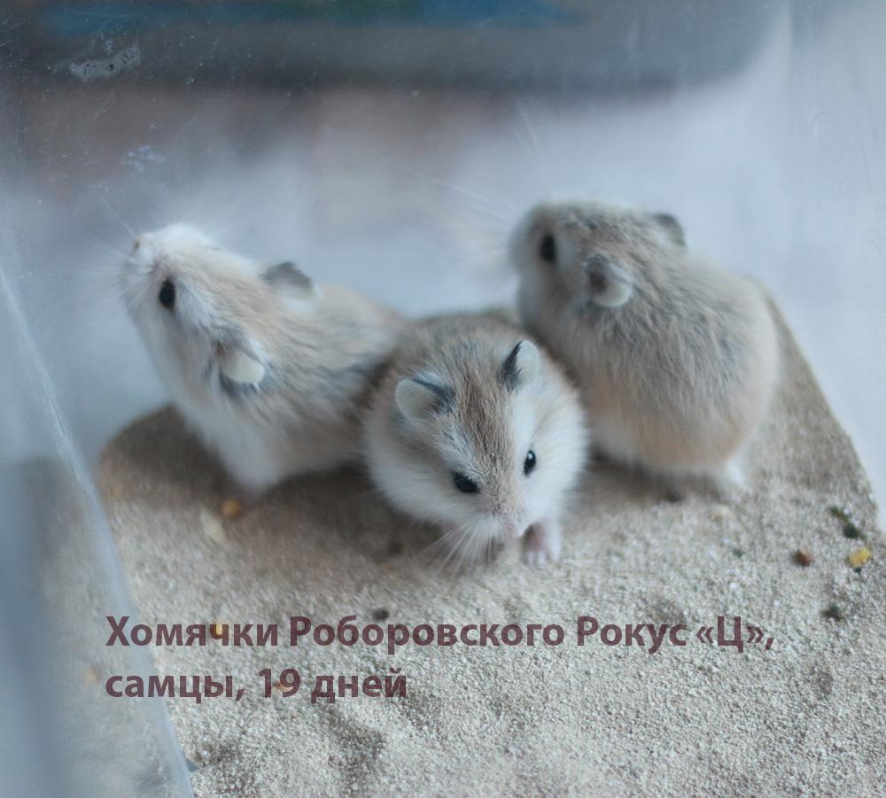 http://images.vfl.ru/ii/1581774539/9118d2c3/29584616.jpg