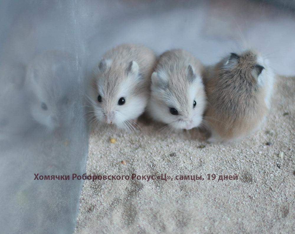 http://images.vfl.ru/ii/1581774540/dde1cce3/29584619.jpg