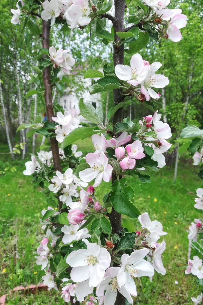 http://images.vfl.ru/ii/1590398854/0066fac0/30613168.jpg