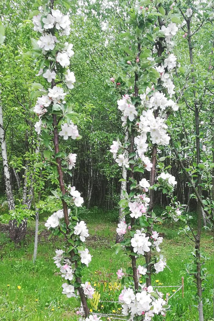 http://images.vfl.ru/ii/1590398854/fd568775/30613169.jpg