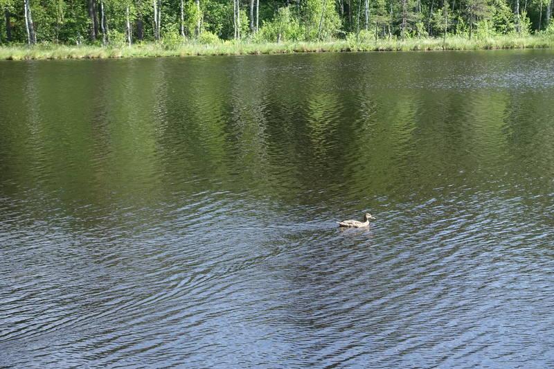 Дачное озеро