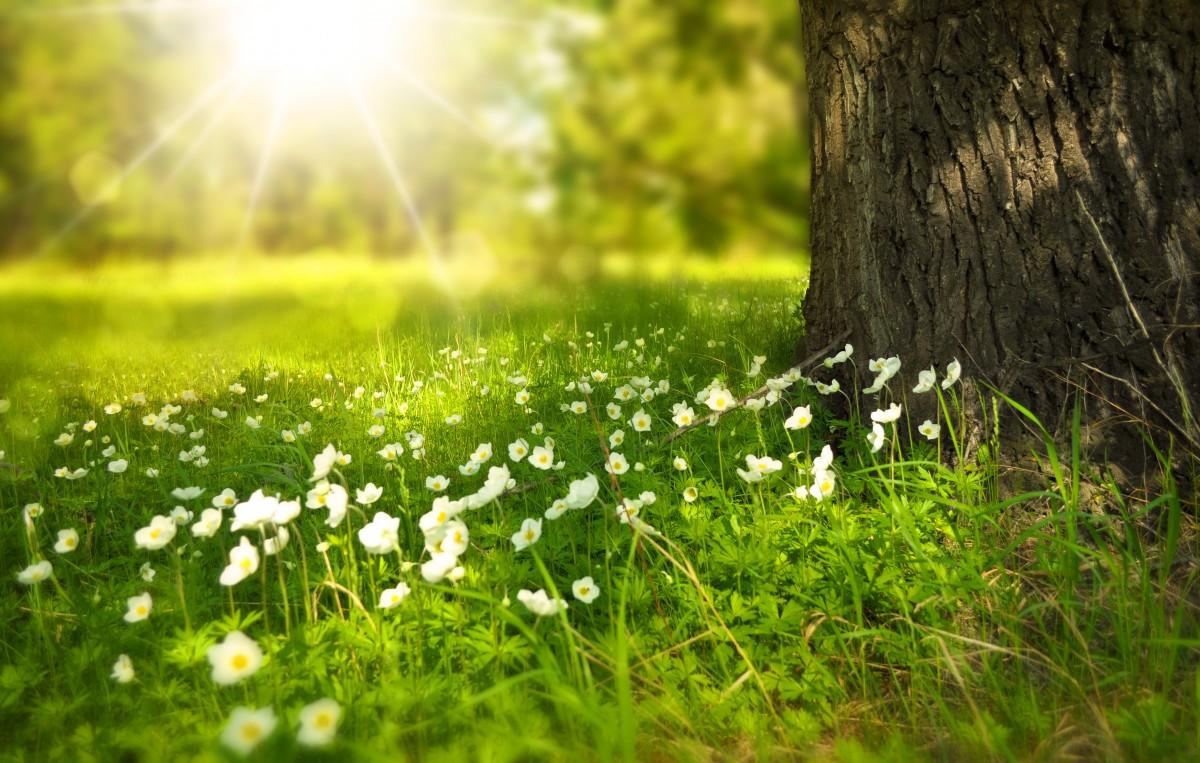 В районной группе пользователи сети жаловались на частые покосы травы в районе.