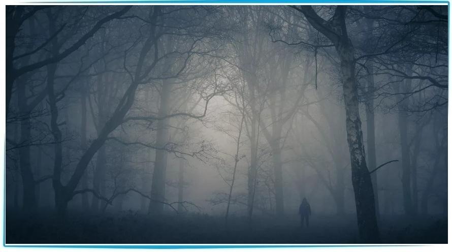 искать людей в лесу