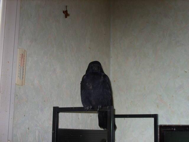 http://images.vfl.ru/ii/1595353994/c7e4b549/31131804_m.jpg