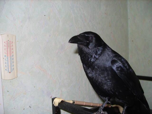 http://images.vfl.ru/ii/1596028741/fd026592/31199288_m.jpg
