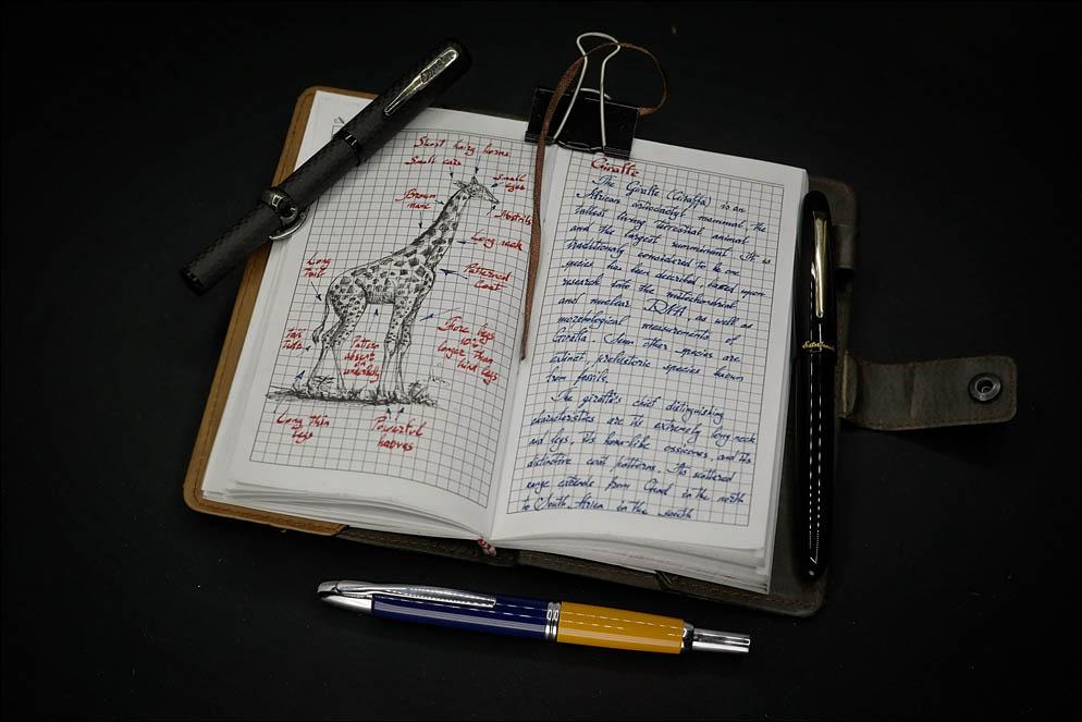 Treveler's notes. Animal life. Giraffe. Lenskiy.org