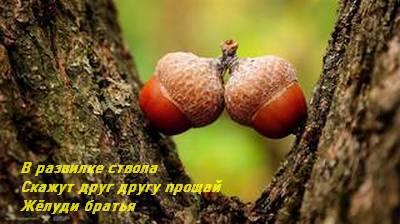 http://images.vfl.ru/ii/1597484752/13aaf2af/31349427_m.jpg