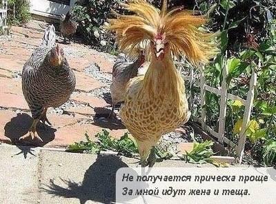 http://images.vfl.ru/ii/1599051101/be7428e7/31517346_m.jpg