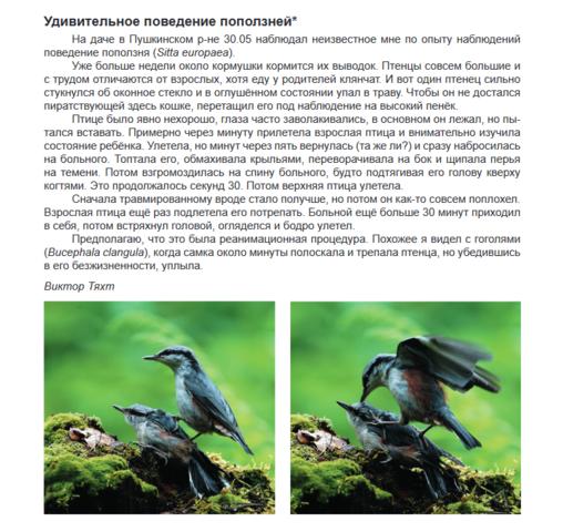 http://images.vfl.ru/ii/1602358703/9f1aa2ef/31897775_m.png
