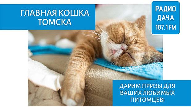 «Радио Дача» в поисках Главной кошки Томска - Новости радио OnAir.ru
