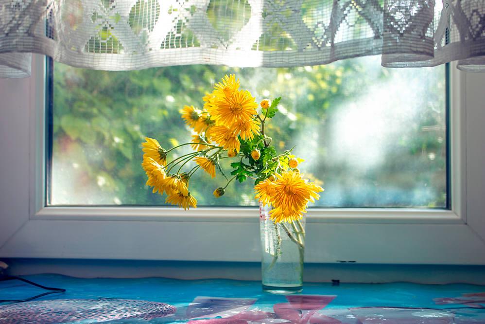 хризантемы-3