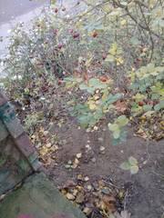 http://images.vfl.ru/ii/1606113409/361773e8/32405329_m.jpg