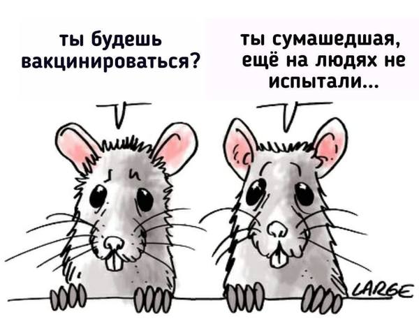 http://images.vfl.ru/ii/1609017543/554b45b4/32782769_m.jpg